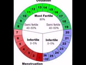 Возможна ли беременность без ПА?