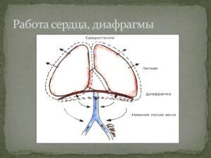 Мембрана в сердце