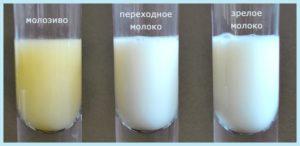 Месячные после родов, уменьшение количества молока