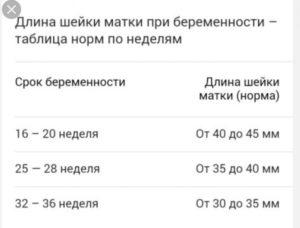 Длина шейки матки на 29 неделе беременности