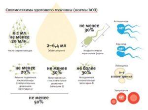 Вероятность беременности, сперма, жизнеспособность сперматозоидов