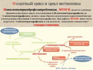 Мутации фолатного цикла
