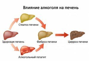 Воздействие КОК на печень