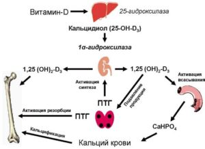 Витамин Д, кальций и железо в крови