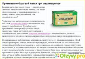 Можно ли одновременно принимать таблетки и чай с боровой маткой?