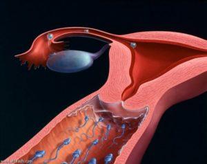 Возможно ли механическое попадание спермы во время принятия душа