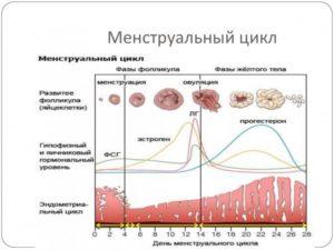 Восстановление менструального цикла после операции