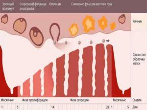 Вероятность беременности за 3 дня до месячных