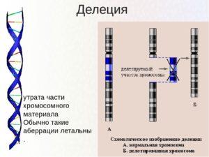 Делеция в хромосоме