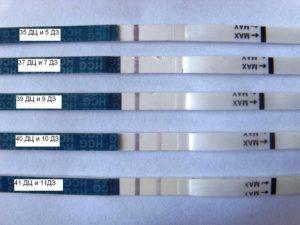 Может ли быть беременность если тесты отрицательные а задержка 7 дней