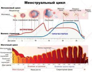 Может ли при повышенном гормона ТТГ нарушается менструальный цикл?