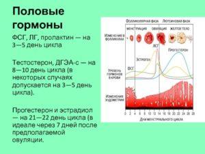 Эко и высокие гормоны ФСГ и ЛГ