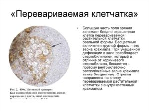 Много переваренной клетчатки