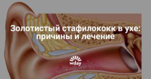 В ухе стафилококк эпидермис