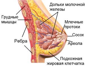 Добавочная долька молочной железы, период ГВ