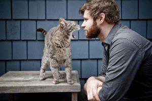 Можно ли контактировать с кошками?