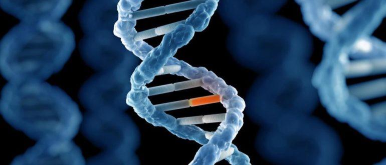 Мутация гена
