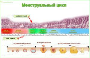 Вопрос о менструальном цикле, овуляции и выделениях