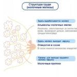 Можно ли заменить эликвис на фарфарин