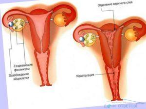 Может ли быть задержка из за начала половой жизни?