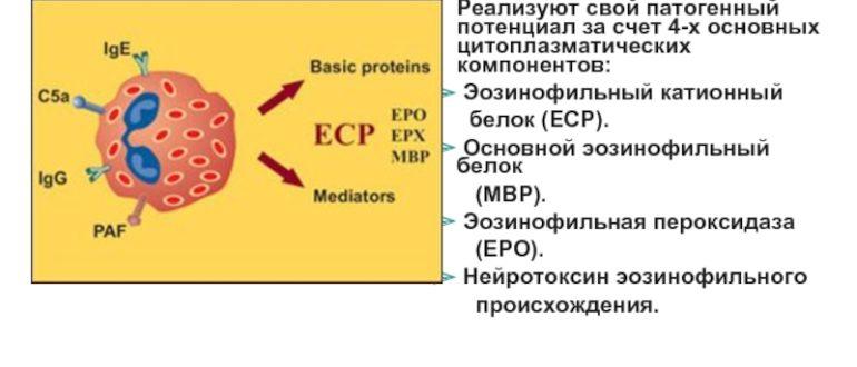 Эозинофильный катионный белок 160!